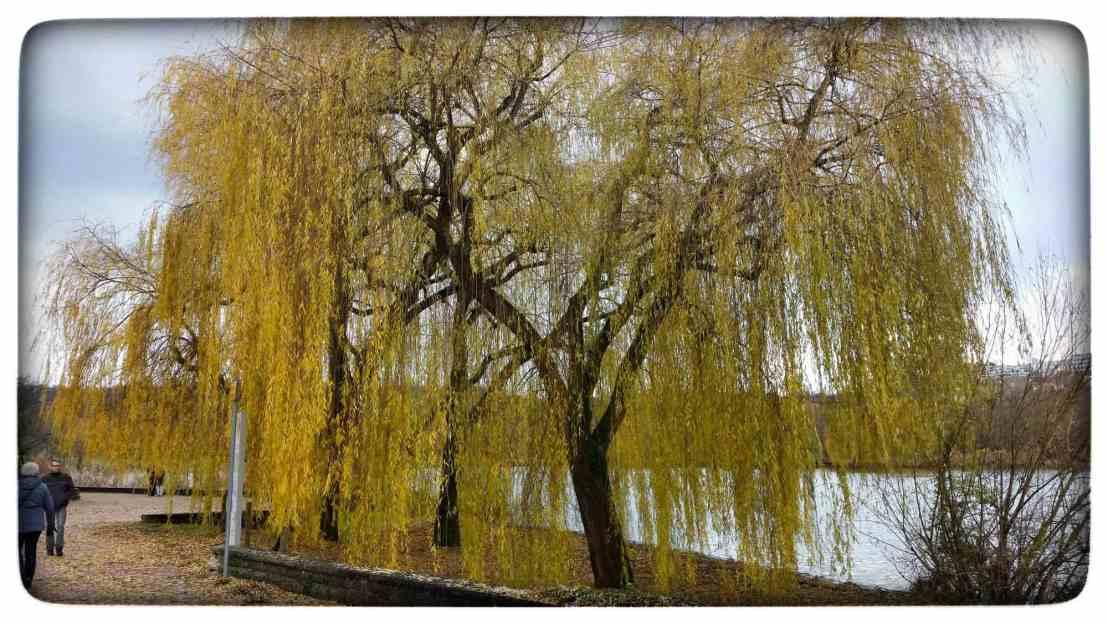 Eine herbstliche Weide am Max Eyth See in Stuttgart