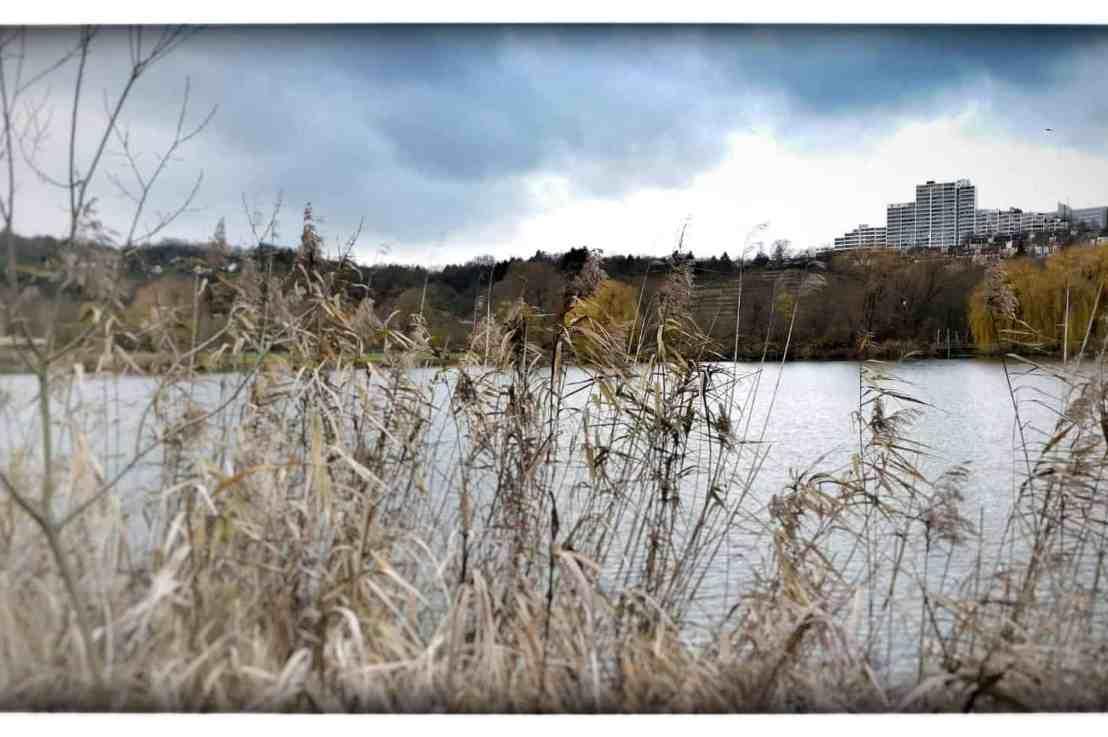 Spaziergang im Winter am Stuttgarter Max-Eyth-See