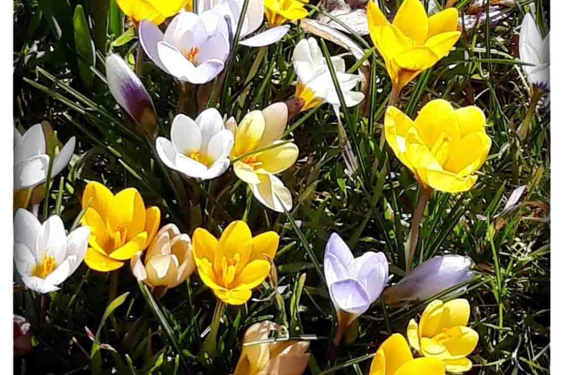 Frühlingserwachen im Grüttpark
