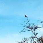 Hummingbird at the Hummingbird trail at UC Santa Cruz Arboretum