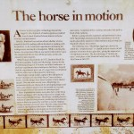The horse in motion, information board at Stanford Equestrian