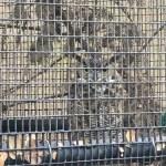 Owl at the Sulphur Creek Nature Center in Hayward.
