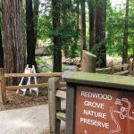 Redwood Grove Nature Preserve, Los Altos.