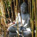 Buddha at the Los Altos Nursery.