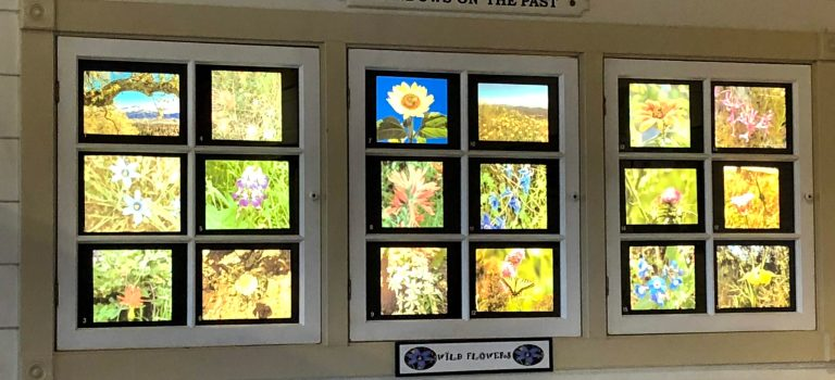 Windows on the Past, a display of wild flowers at the Museum of San Ramon Valley, Danville.