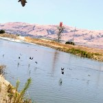 Birds at Baylands Park, Sunnyvale.