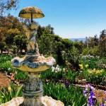 Fountain surrounded by irises at Nola's Iris Garden.