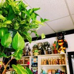 Plants and toys at Zonkey's.