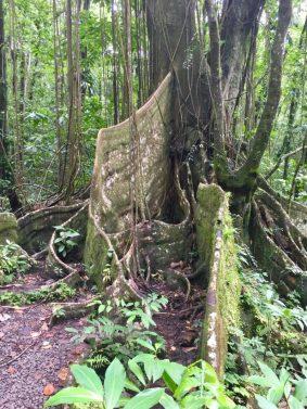 Sturdy tree