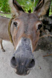 Donkey Worker