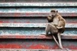 So many monkeys! Batu Caves, Malaysia