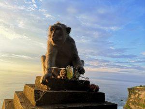 Bali Uluwatu Temple Monkey with shades