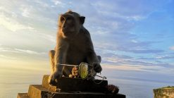 Bali Uluwatu Temple Monkey with shades