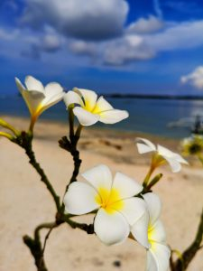 Flowers at Gilli Air with sea in the background