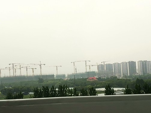 The crane is the Chinese national bird
