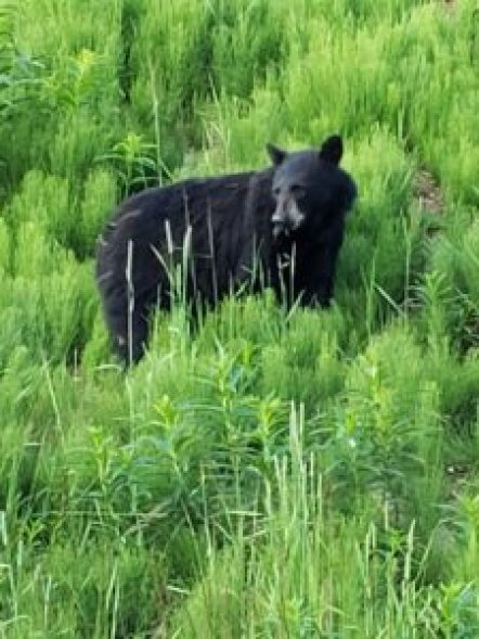 An experienced guide can help spot bears
