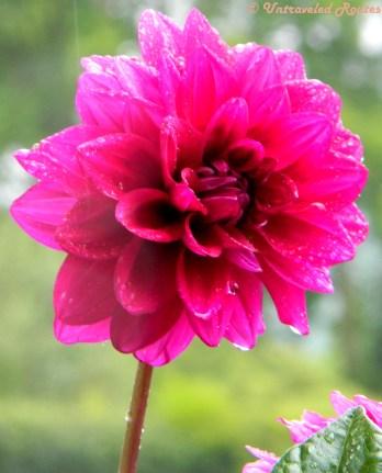 Flowers from Srinagar