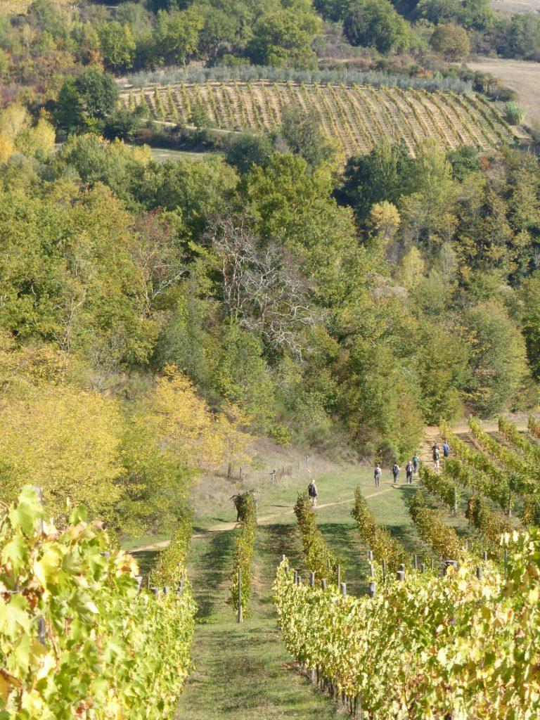 via-francigena-vitigni