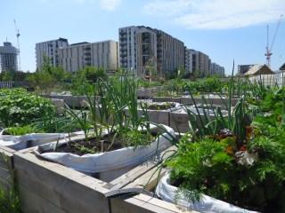 Day 5 - Mobile Urban Garden City