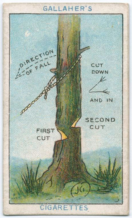 How-to-fell-tree