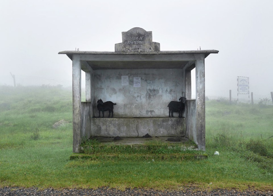 Goats shelter in a bus stop during a drizzly afternoon. While it doesn't rain all day during the monsoons in Mawsynram, it does rain every day, with the heaviest rainfall coming mostly during the night. (© Amos Chapple)