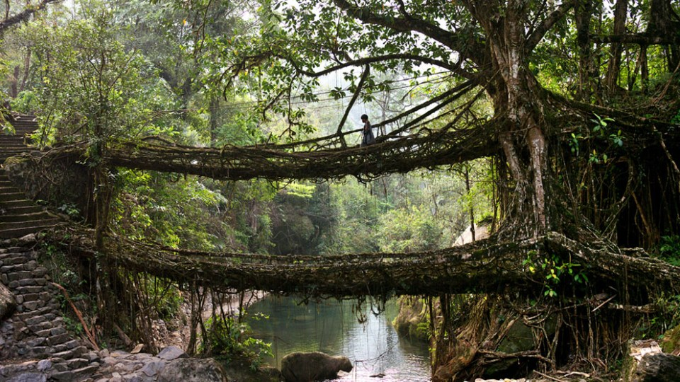"In the valley beneath Mawsynram, the village of Nongriat maintains the best-known example of the ""living bridges"" which have been used for centuries in the region. (© Amos Chapple)"