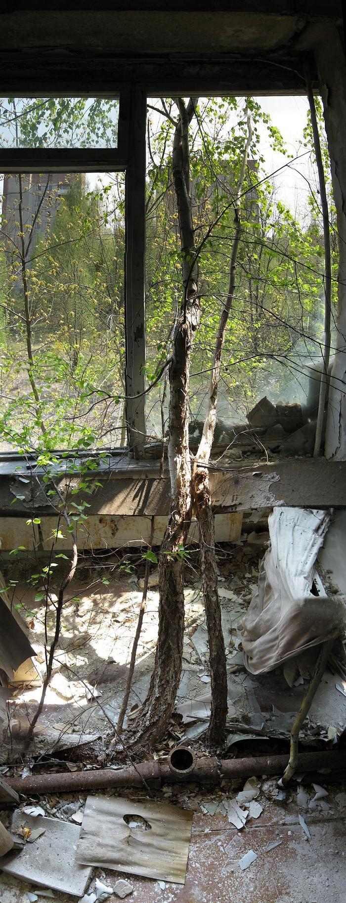 chernobyl15