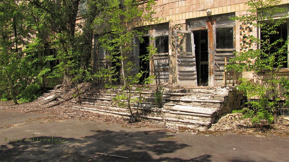 Nature S Rebirth In Chernobyl Unusual Places