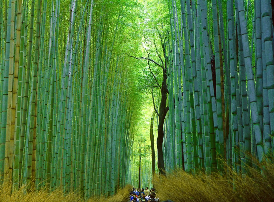 Arashiyama's Sagano Bamboo Forest, Kyoto, Japan