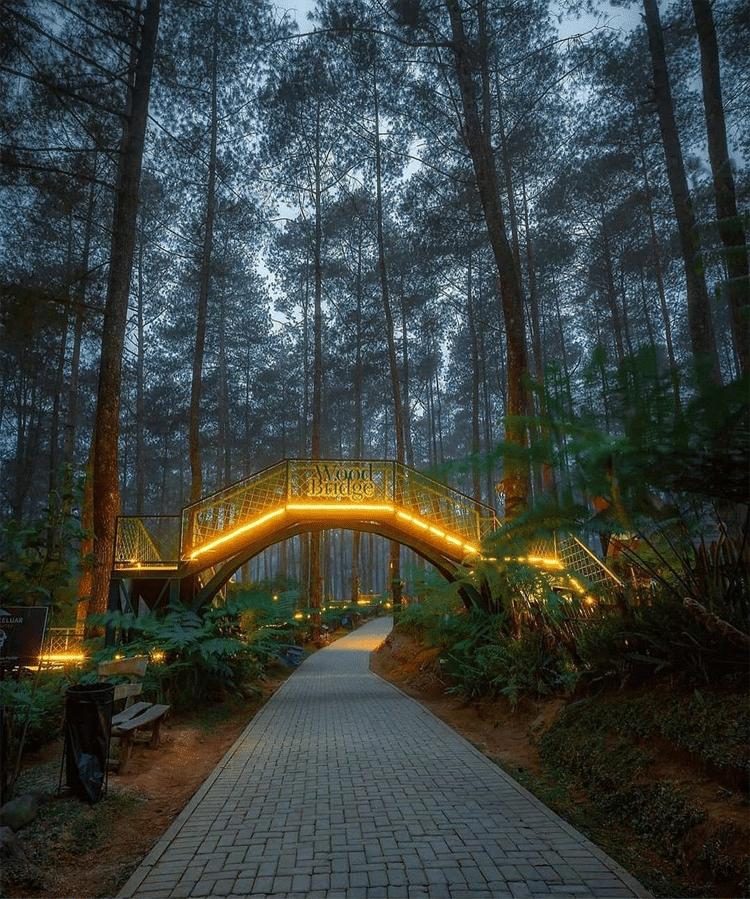 Orchid Forest Cikole bridge