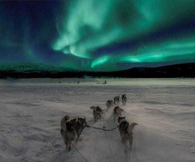 Aurora Borealis dogs