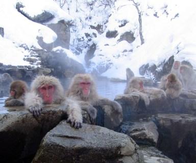 igokudani hotspring in Nagano Japan