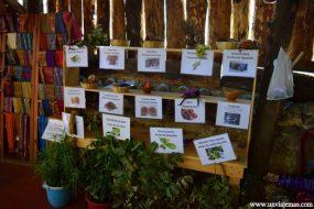 Las plantas usadas para teñir los tejidos