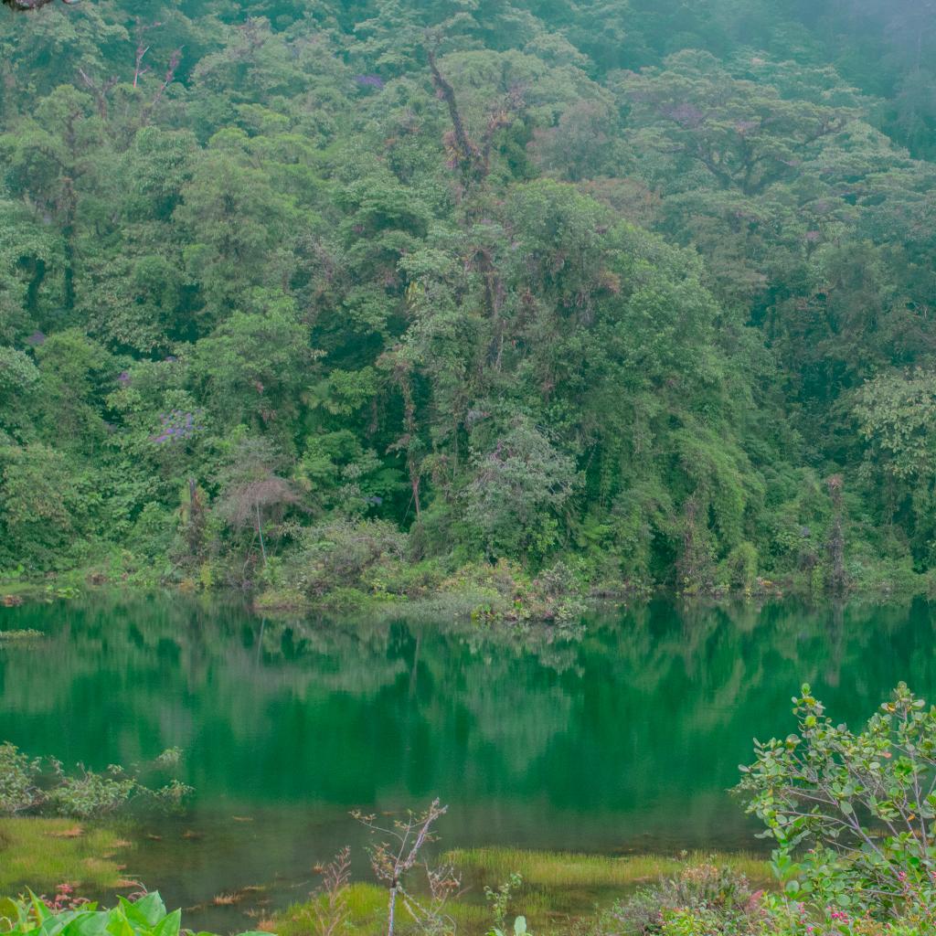 Pozo Verde