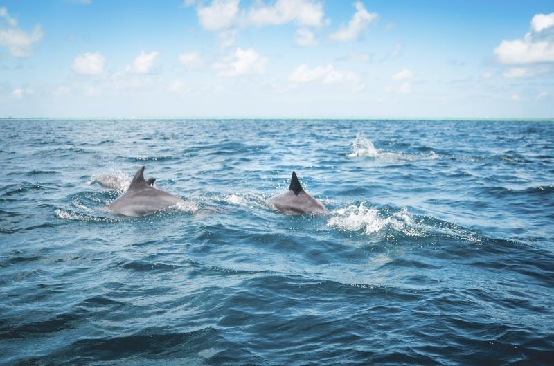 Excursión delfines en azores.