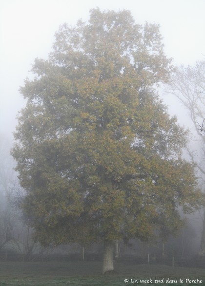 Brouillard dans le Perche