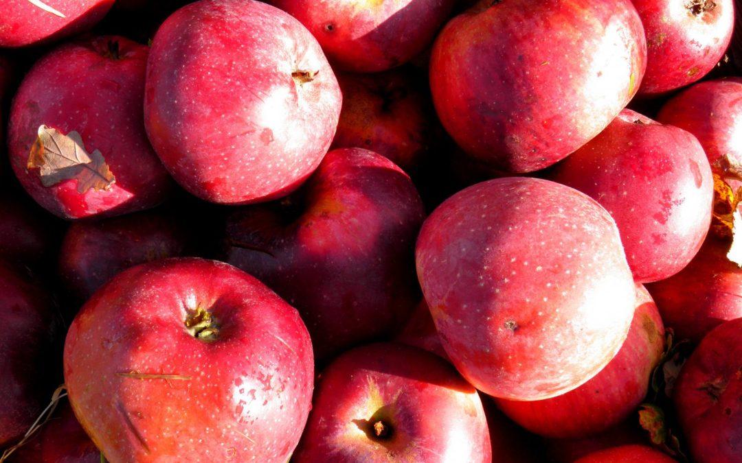 Pommes Calville Rouge