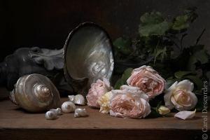 antiquaire-photographe-nature-morte-nacre