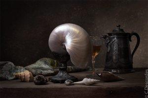 antiquaire-photographe-nature-morte-nautile
