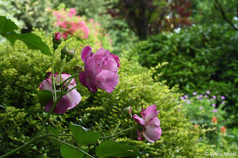 Le jardin du Coudray chez Lio Helix