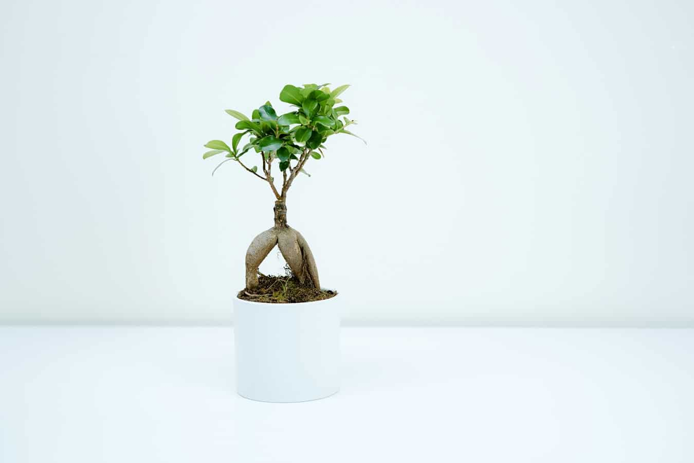 Fun Ways to Relieve Stress at Work Growing Bonsai