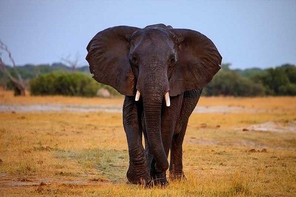 將獵殺當成娛樂!非洲專業獵人自食其果被大象壓死 - UNWIRE.HK