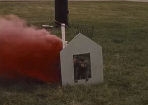 Image from immediately after the monkey has successfully pulled a lever and ignited an incendiary device. It was expecting a treat.