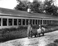 16-G-128-AAA-7474: Livingston Co., Illinois. 7-47. Roger, 5, and Marilyn Ann, 4, Henegger Pulling Basket of Eggs in Wagon.