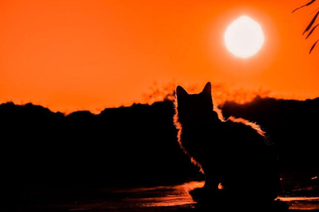 ネコが出てくるイエモンの歌!【猫も連れて行こう好きにやればいい】