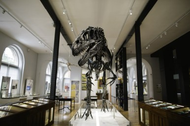Roary our Allosaurus at the Lapworth