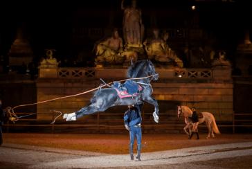 prove Cordoba Equestre_barbara roppo 2013