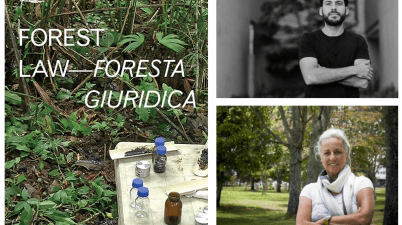 Foresta giuridica - Forest law
