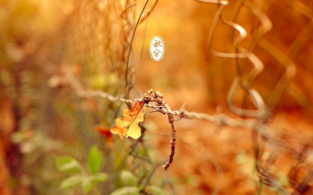 Hd Wallpaper Fall Leaves 迷人的秋枫 高清壁纸 风景图片 回车桌面