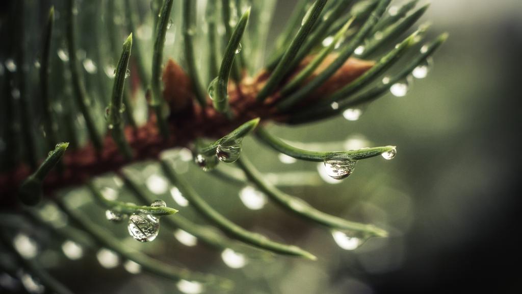 Rain Fall Live Wallpaper 雨后的植株 高清图片 植物壁纸 回车桌面